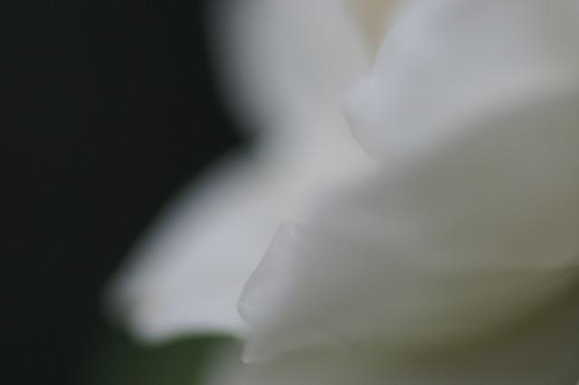 d0079278_1951281.jpg