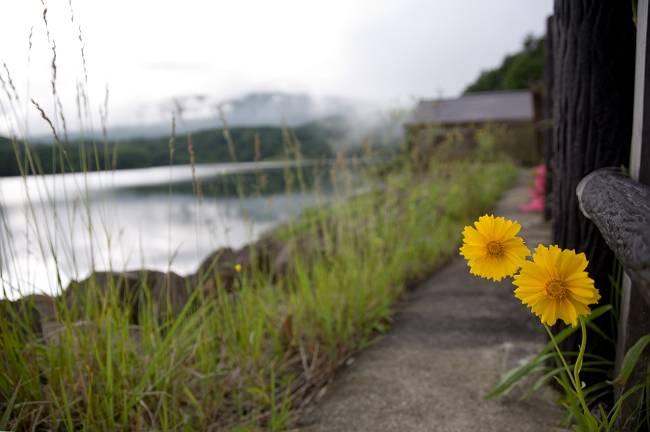 ダム湖に咲く_b0074098_2119344.jpg