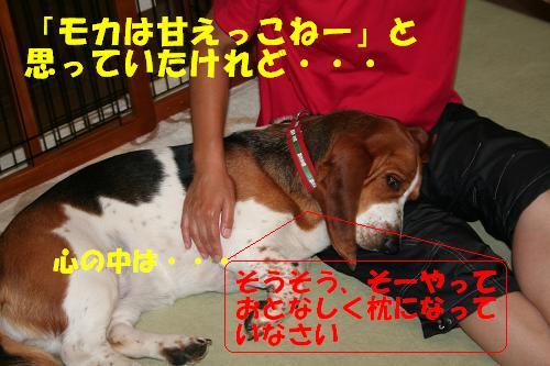 f0121712_164163.jpg