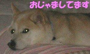 f0082855_16423944.jpg