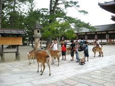 旅行気分の奈良_d0110462_1419051.jpg
