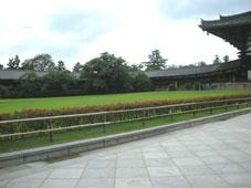旅行気分の奈良_d0110462_14224811.jpg