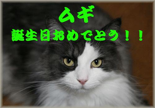 c0080002_17142629.jpg