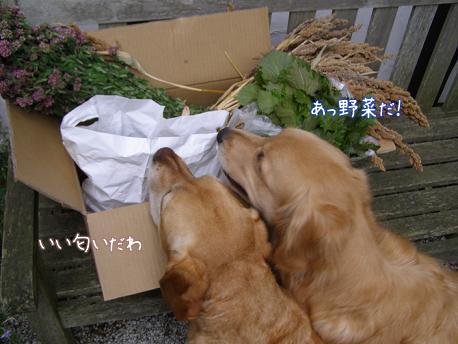 野菜に群がる_f0064906_18205929.jpg