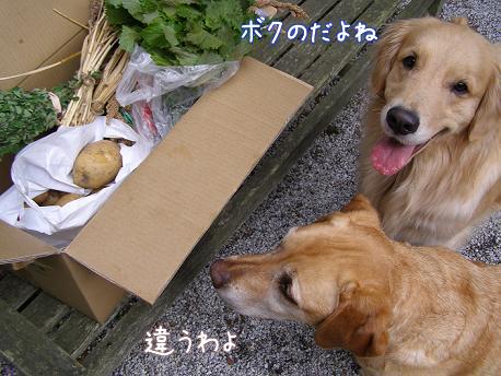 野菜に群がる_f0064906_18211852.jpg