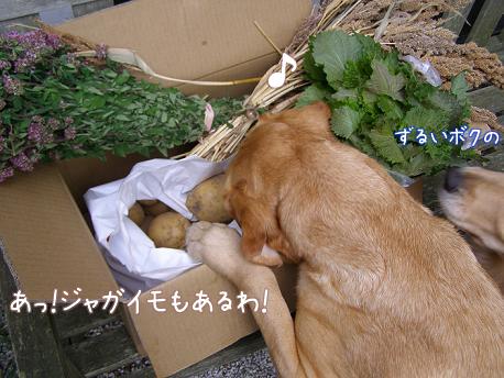 野菜に群がる_f0064906_1824458.jpg