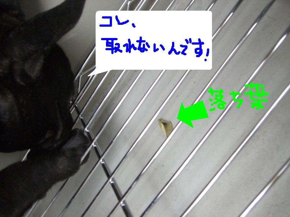 c0113109_0303495.jpg