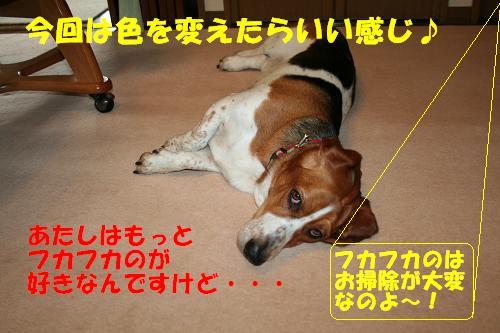 f0121712_9544158.jpg