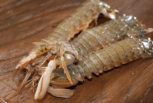 蝦蛄/シャコ............ 姿は怪獣ですが味は最高です!!_d0069838_1153725.jpg