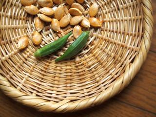 オクラとカボチャの種の収穫_c0110869_1110273.jpg