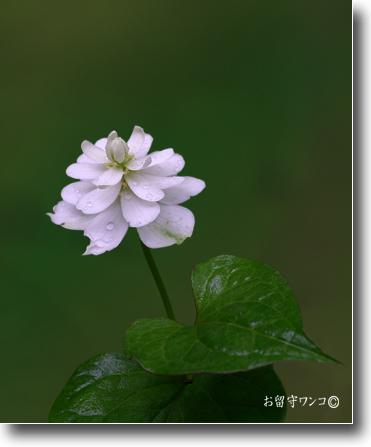 f0111147_930410.jpg