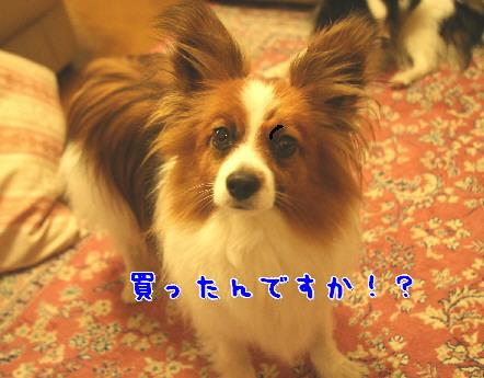 d0013149_1475781.jpg