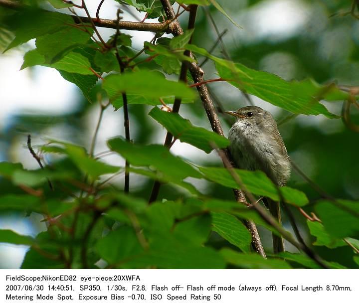2007.6.30(3) 八千穂高原自然園_c0062451_20472196.jpg