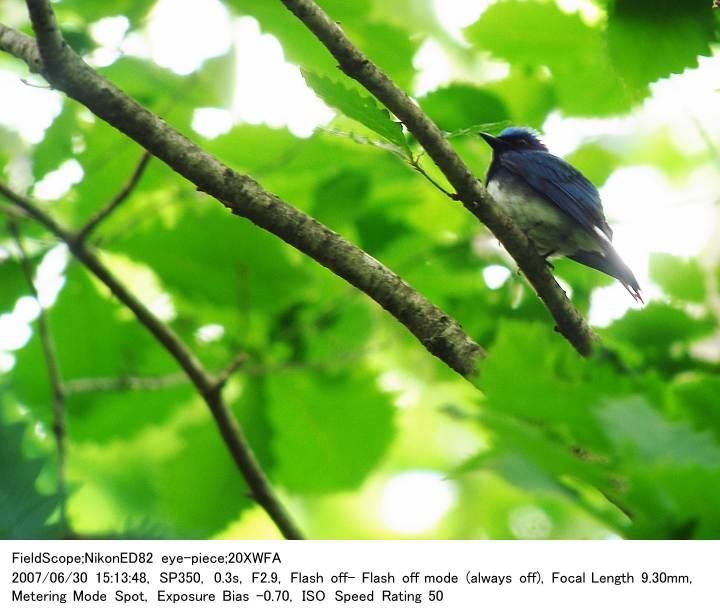 2007.6.30(3) 八千穂高原自然園_c0062451_20474919.jpg