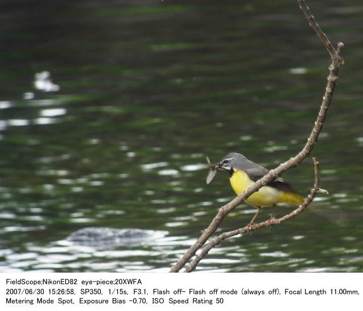 2007.6.30(3) 八千穂高原自然園_c0062451_20481711.jpg