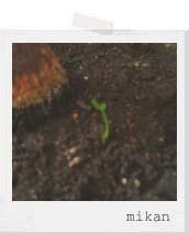 芽が出た!!!_f0128761_1534497.jpg