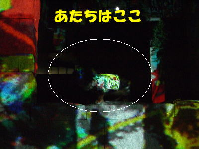 d0020869_1930851.jpg