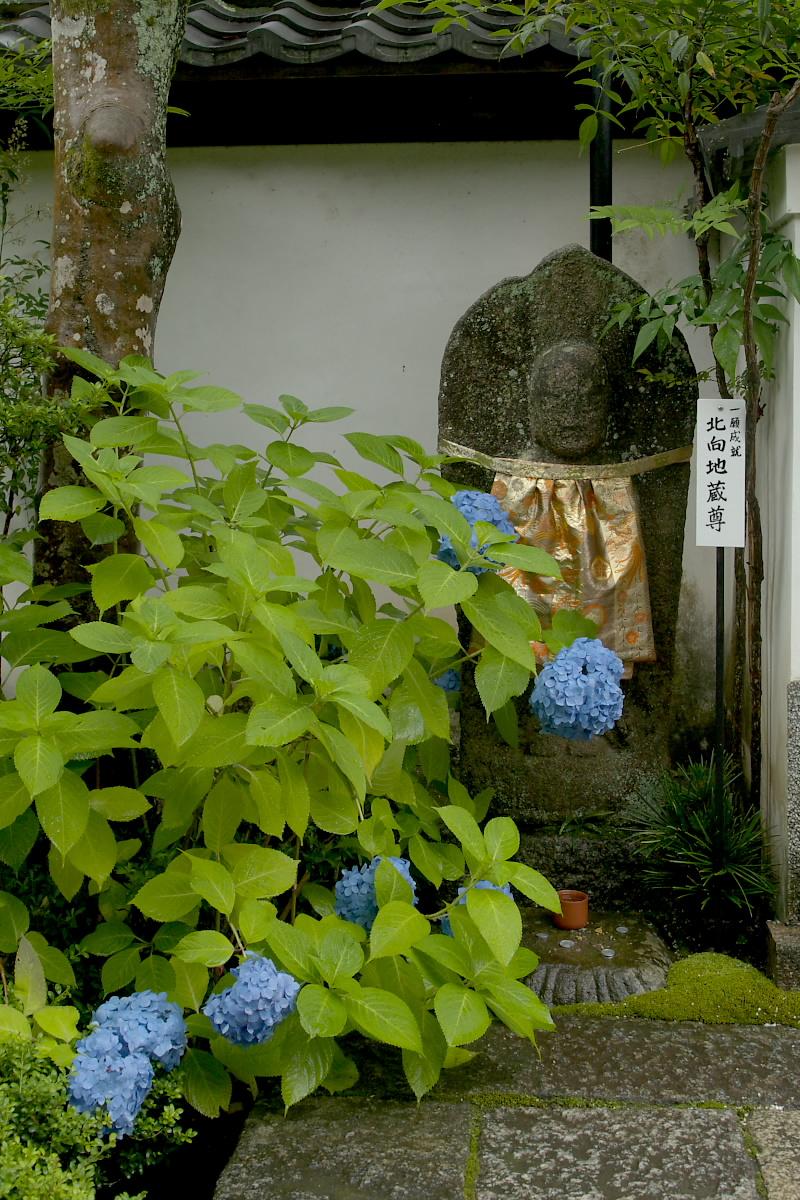 奈良 矢田寺 <紫陽花> 雨 2_f0021869_1826516.jpg