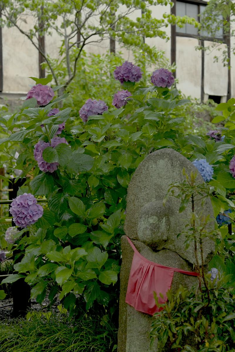 奈良 矢田寺 <紫陽花> 雨 3_f0021869_18411133.jpg