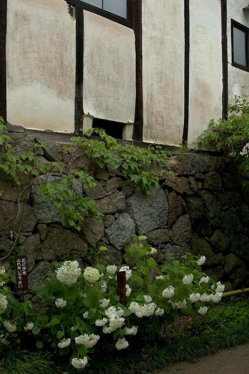 奈良 矢田寺 <紫陽花> 雨 3_f0021869_18431593.jpg