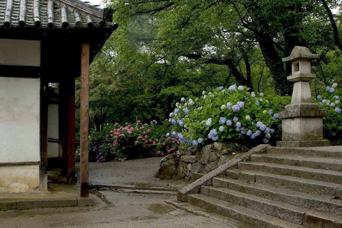 奈良 矢田寺 <紫陽花> 雨 3_f0021869_18471127.jpg
