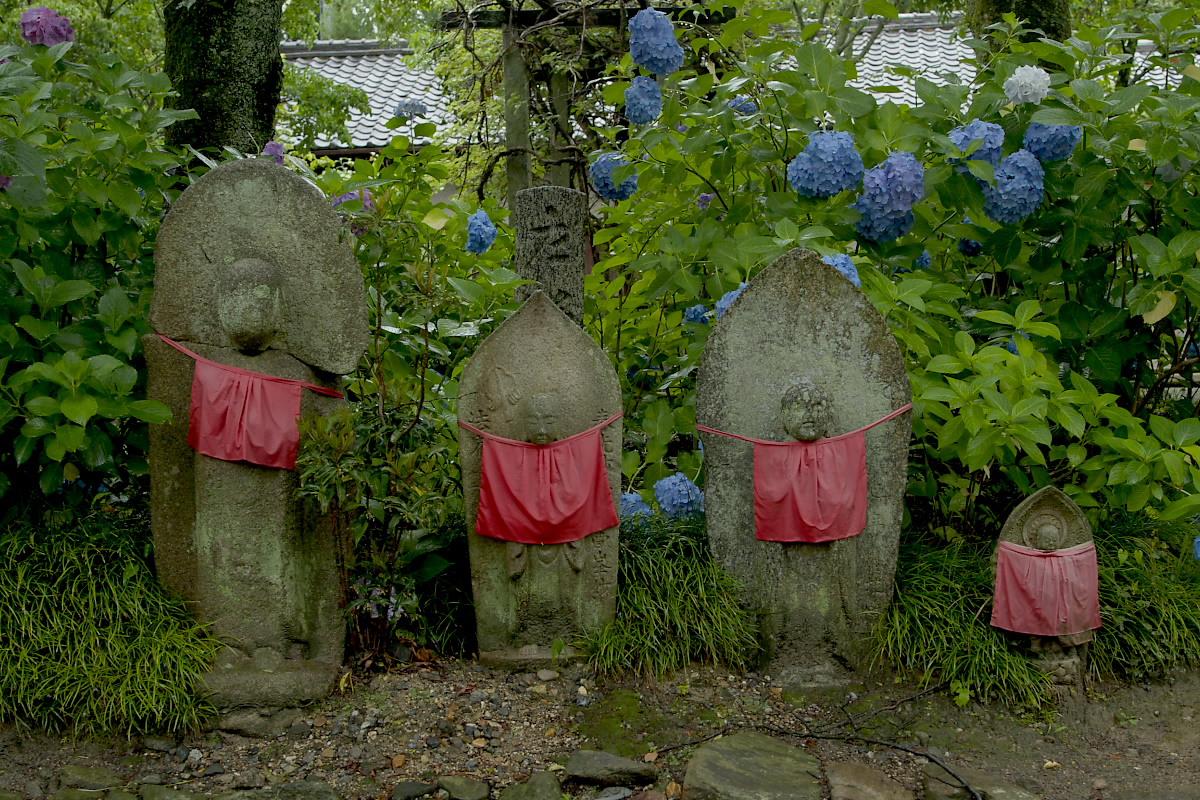 奈良 矢田寺 <紫陽花> 雨 3_f0021869_1848294.jpg