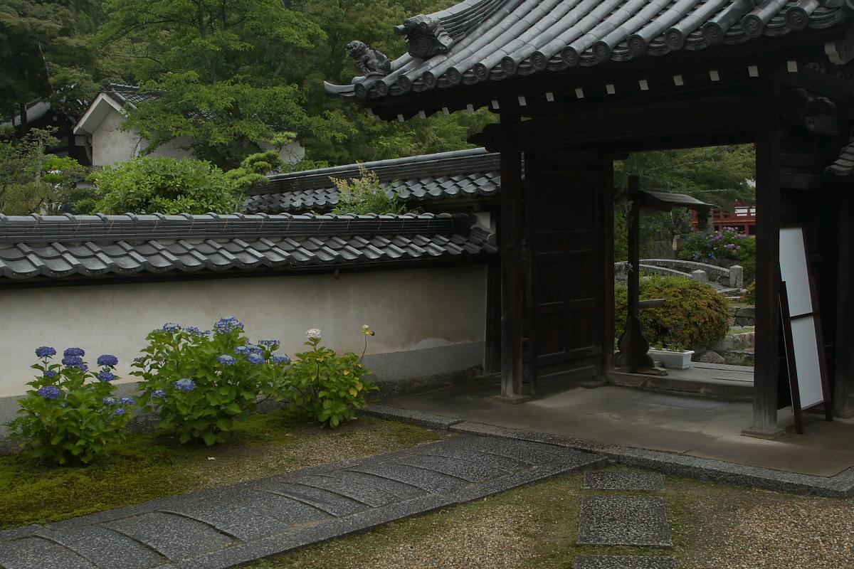 奈良 矢田寺 <紫陽花> 雨 5_f0021869_19553386.jpg