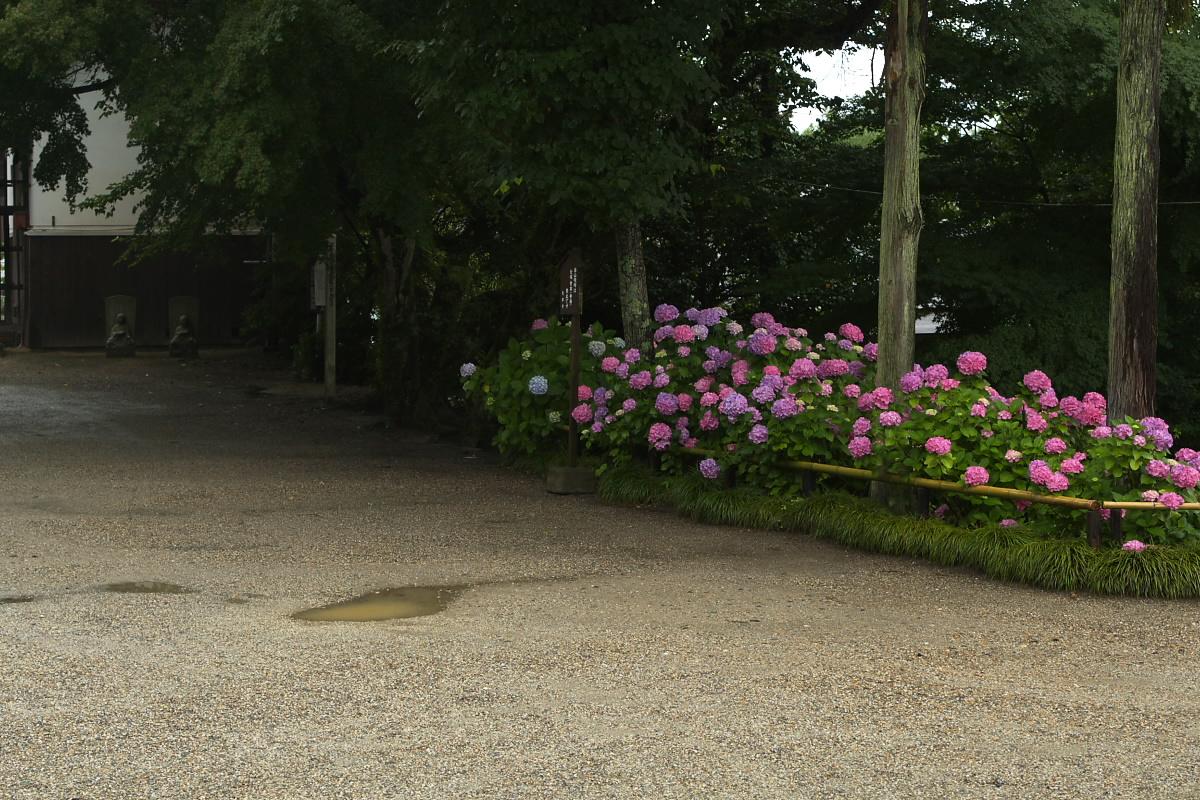 奈良 矢田寺 <紫陽花> 雨 5_f0021869_19595981.jpg