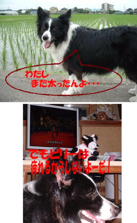 c0120585_612876.jpg