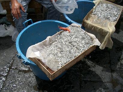 一周年記念!イタリアの市場その3 カターニャ魚介編_b0107003_181449.jpg