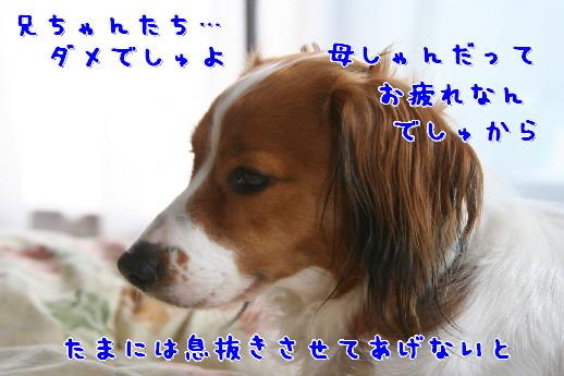d0013149_1323762.jpg