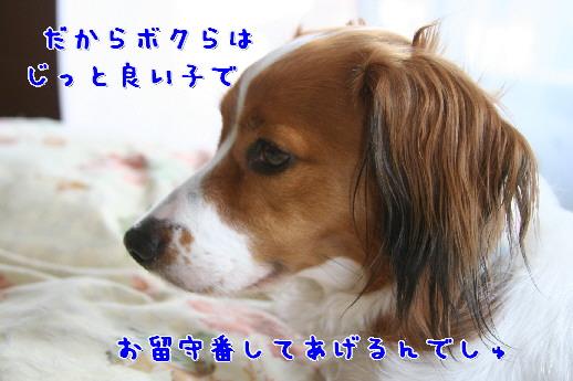 d0013149_1343079.jpg