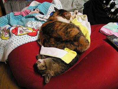そこで寝ちゃ、やばいでしょ!_a0028451_19425052.jpg
