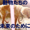 f0052071_1683161.jpg