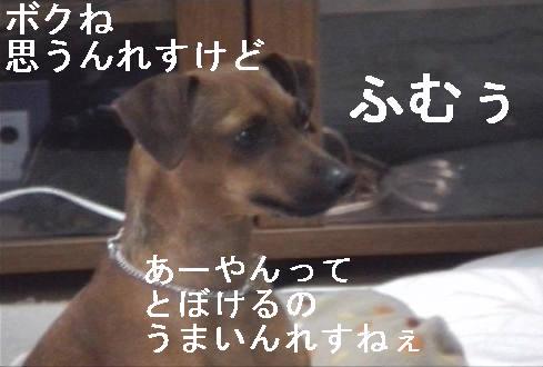 f0123589_19522966.jpg