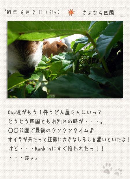 b0040323_8553676.jpg