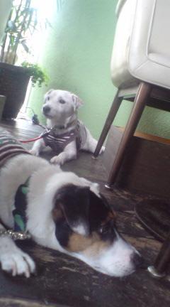 犬の権利を広げたい_c0099133_24185.jpg