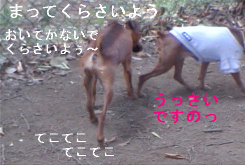 f0123589_15282756.jpg