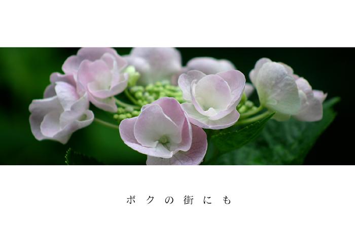 b0072697_20315322.jpg