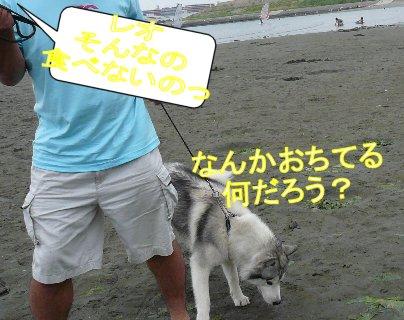 f0112407_14323874.jpg