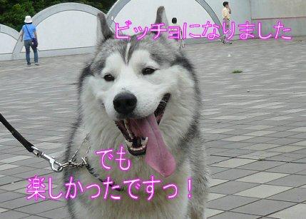 f0112407_15333777.jpg
