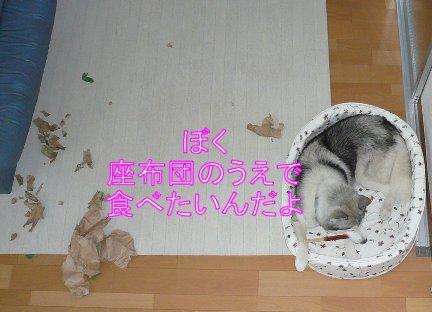 f0112407_16224872.jpg