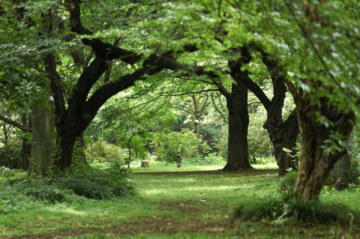 雨上がりの小石川植物園_f0012718_22522576.jpg