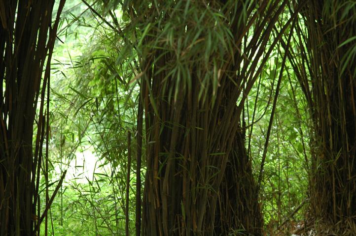 雨上がりの小石川植物園_f0012718_23303090.jpg
