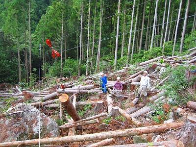「森林ボランティア日記」4/三浦_a0051539_584962.jpg