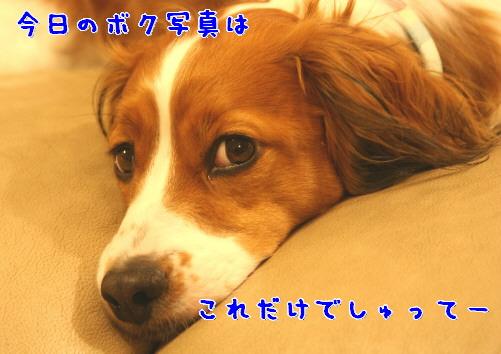d0013149_0595737.jpg