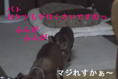 f0123589_1755152.jpg