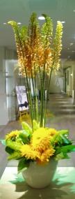Sun  Flower_d0104091_19234921.jpg