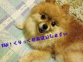 c0052304_22404131.jpg