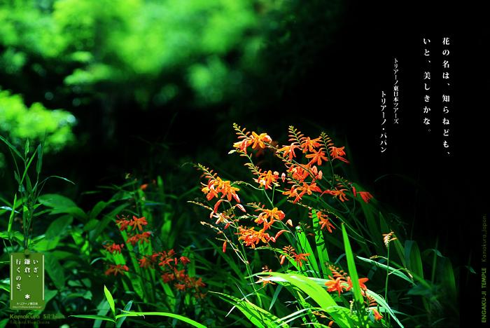 鎌倉シルビアン 18     円覚寺 百鷺池へ_f0038408_17515678.jpg